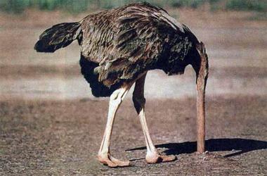 cabeza_de_avestruz1